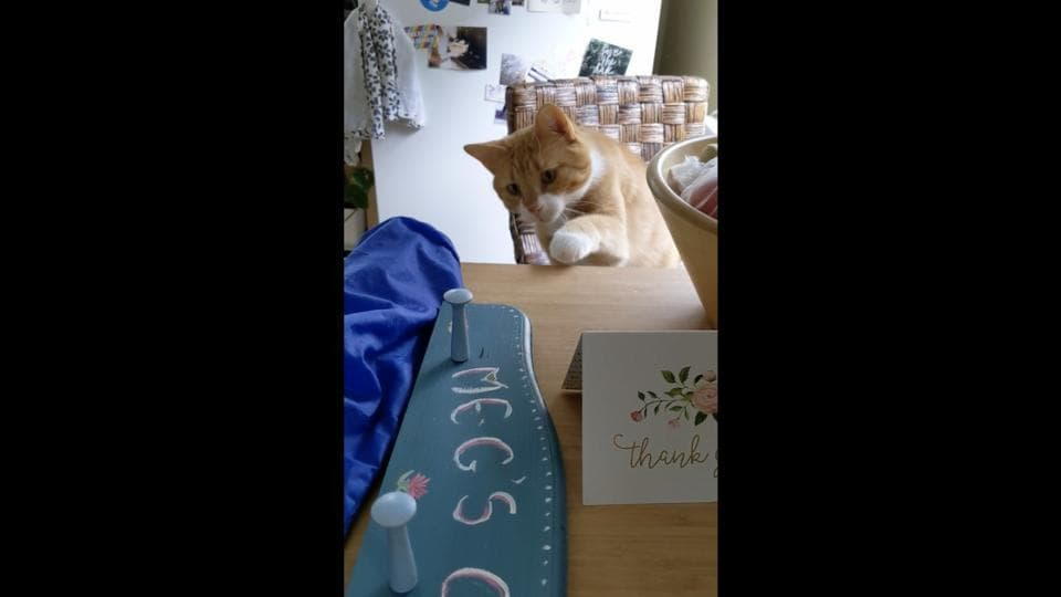 The image shows Cooper, the cat, looking at a blue coloured coat rack.