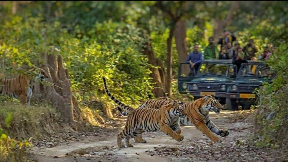 In the operation, about 700 forest department staffers are being deployed in the world famous tiger reserve for round-the-clock patrolling during the monsoon, said officials.