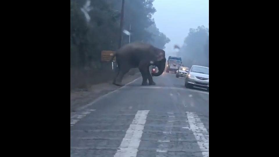The elephant trying to cross the road.