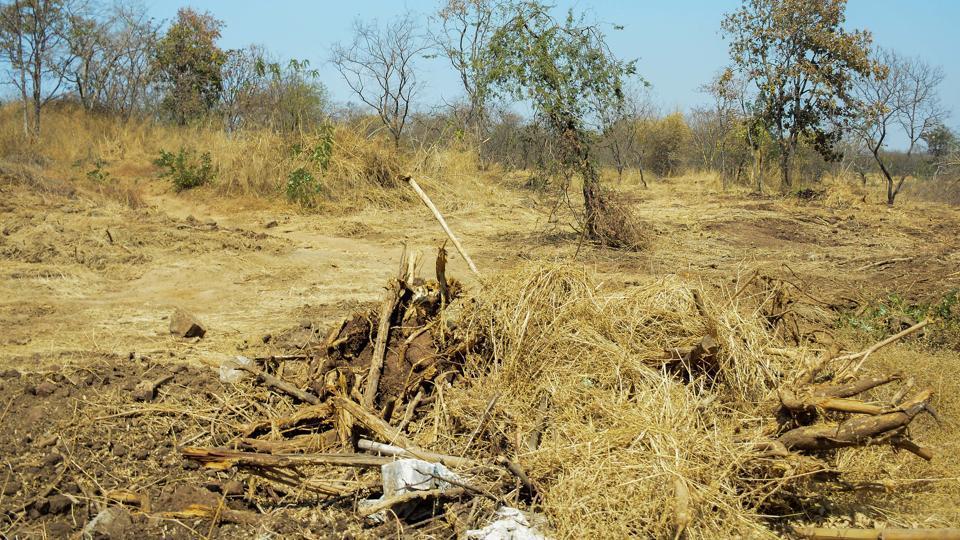 550 trees were felled during lockdown in Tehri Garhwal district.