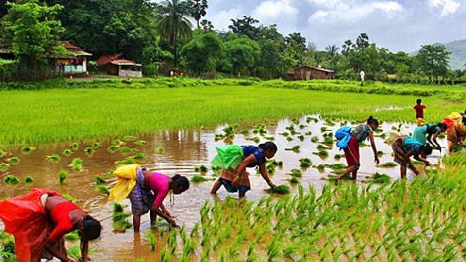 Around 140,000 such groups would be formed with each group comprising five farmers. Around 70,000 groups will get farm loans under the scheme this year. (Photo: Praful Gangurde)