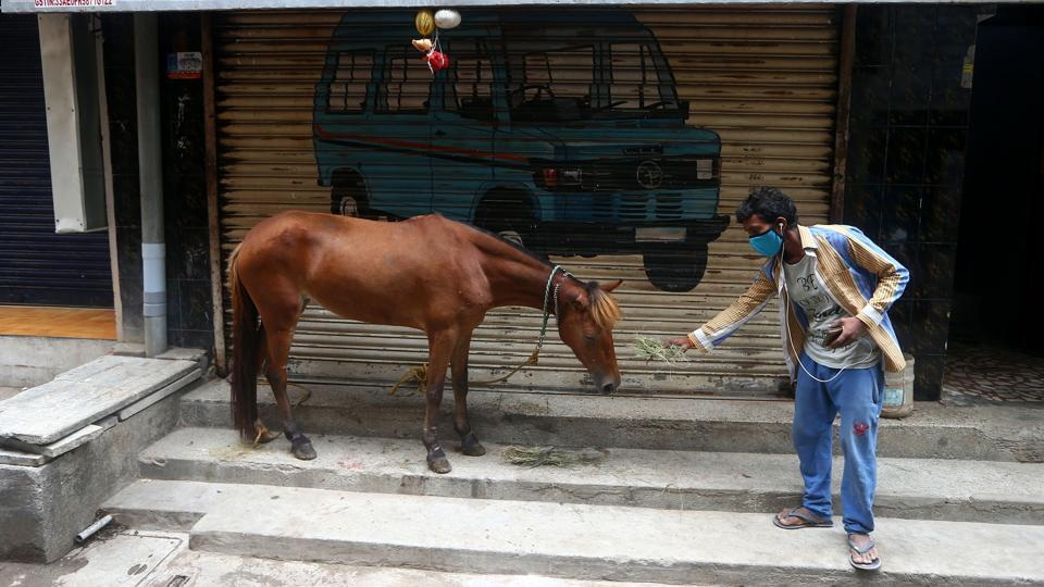 A man feeds his horse in Chennai on July 4. Tamil Nadu on July 3 became the second state in India to cross one lakh cases, with a total of 102,721 people infected with Covid-19 disease in the state where five districts, including Chennai, are under an intense lockdown to prevent the spread of the coronavirus. (ANI)
