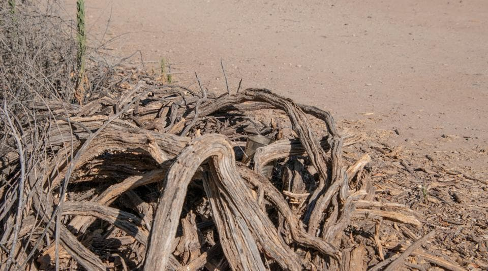 There's a lizard hiding in this picture. Can you find it?