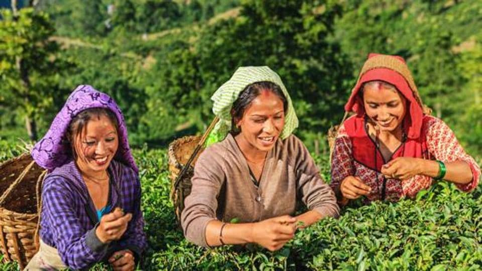 According to the provisional data, tea production in Assam fell to 13.21 million kg in April from 44.98 million kg a year ago.