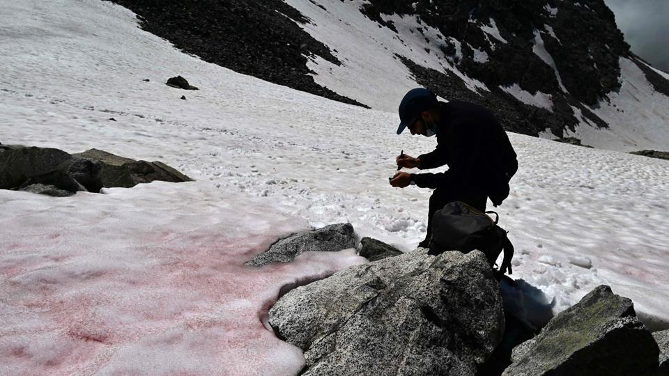 A researcher at CNR (National Research Council) takes samples of the pink snow. Normally ice reflects more than 80 percent of the sun's radiation back into the atmosphere, but as algae appear, they darken the ice so that it absorbs the heat and melts more quickly. Melting ice gives them vital water and air meanwhile adding red hues to the white ice. (Miguel Medina / AFP)