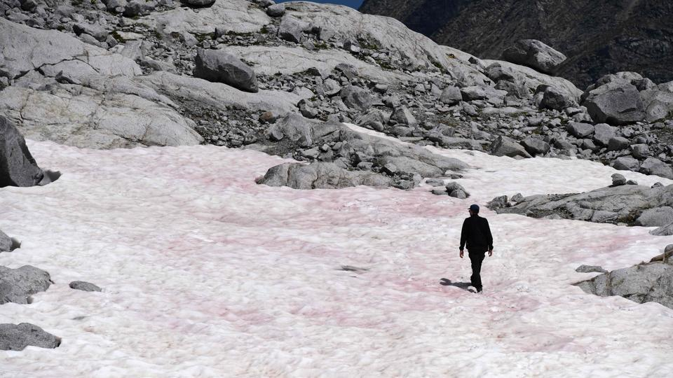 A man is seen walking on the pink coloured glacial ice on July 04. The origin of the alga is debated; however, Biagio Di Mauro of Italy's National Research Council believes that the pink snow observed on parts of the Presena glacier is likely caused by the plant Ancylonema nordenskioeldii, also found in the 'Dark-zone' of Greenland where the ice is rapidly melting. (Miguel Medina / AFP)