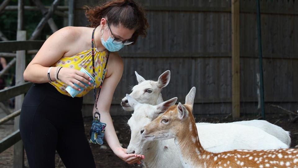 Shae McGinty of Levittown feeds the deer at the Long Island Game Farm as it reopens to the public in Manorville, New York on July 8.  (Bruce Bennett / AFP)
