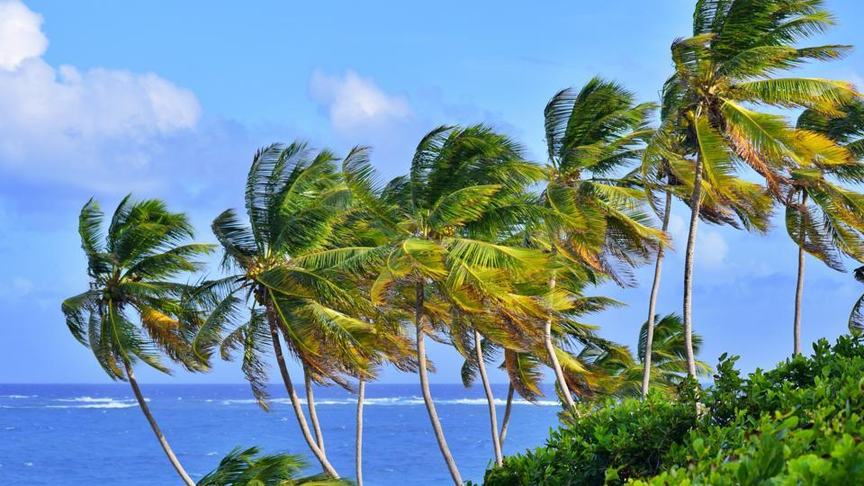 Feel in the cool vibes of summer with a workation in Barbados