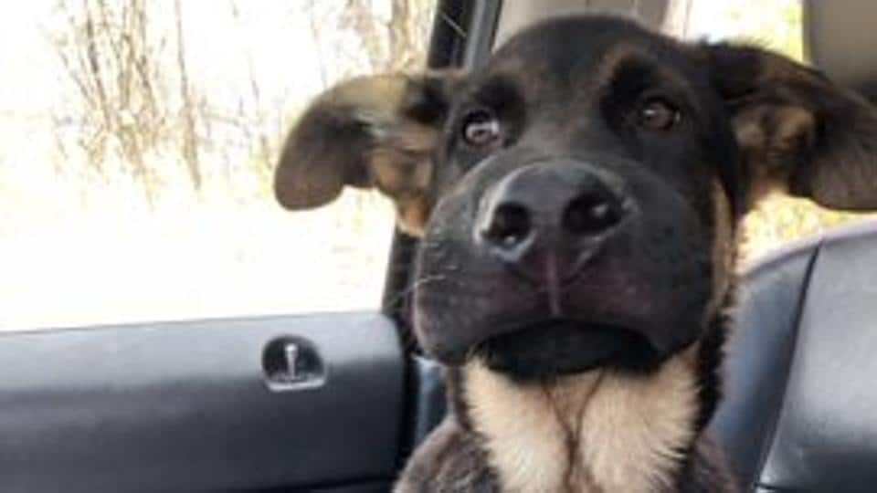 Finn, a doggo extended his paw of friendship to a bee and the situation kind of went downhill after that.