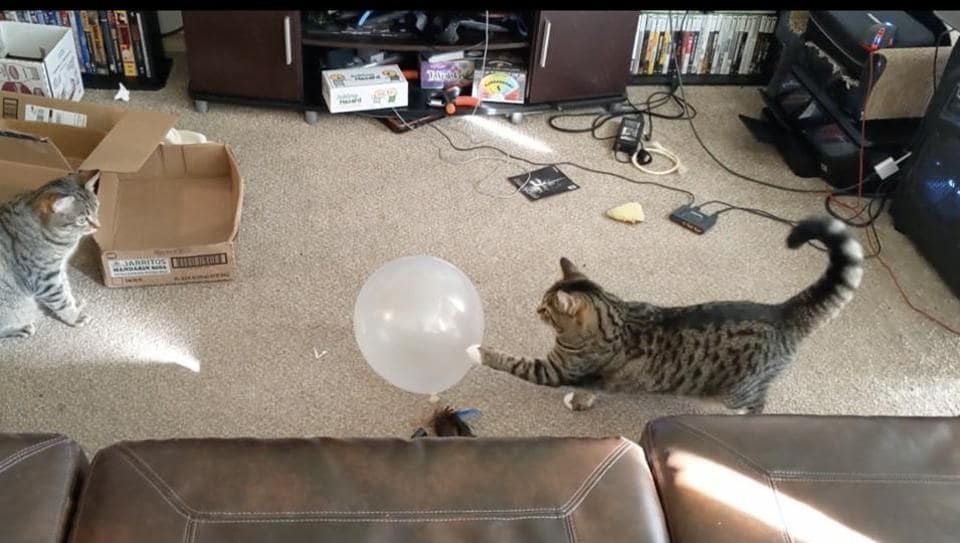 The Exploding Balloon and the Cat