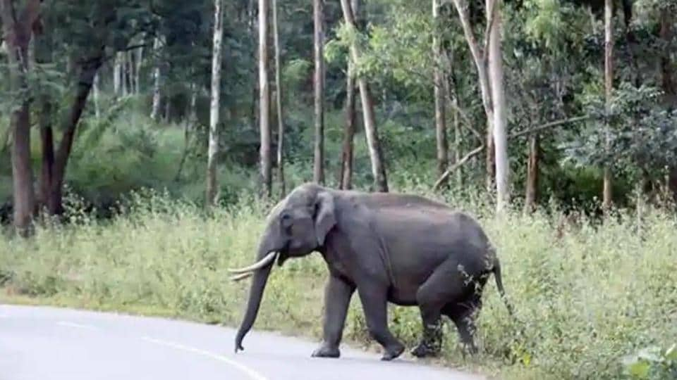 Two of these four elephants touched cables that were connected illegally to high tension overhead wires by local villagers.