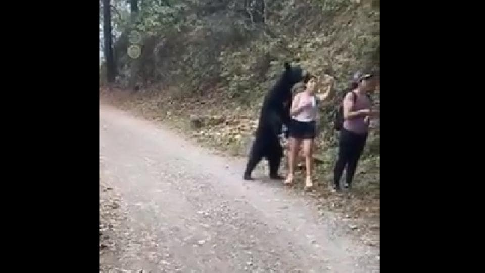 An online petition at Change.org has gotten over 135,000 signatures against relocating the bear outside the park or to a zoo.