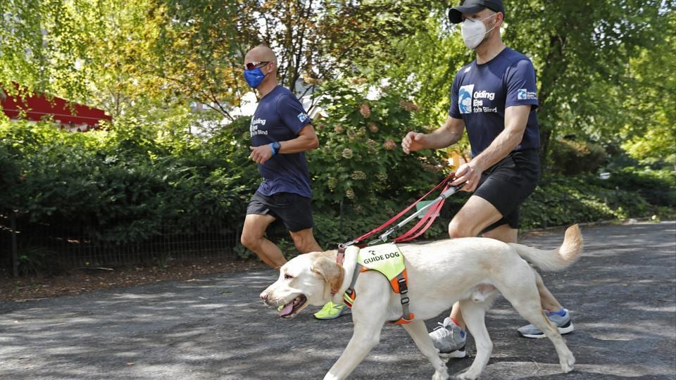 Thomas Panek, right, runs with guide dog Blaze and Mike Racioppo, a training specialist for running guide dogs, Thursday, July 23, 2020, in Central Park in New York. Panek, a blind runner with a wall full of ribbons from marathons he ran with a human guide, developed a canine running guide training program five years ago after becoming president and CEO of Guiding Eyes for the Blind in suburban New York.  (AP Photo/Kathy Willens)
