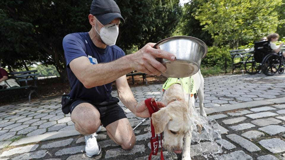 Thomas Panek douses his guide dog Blaze with water after the pair went for a run, in Central Park in New York, Thursday, July 23, 2020. A blind runner with a wall full of ribbons from marathons he ran with a human guide, Panek developed a canine running guide training program five years ago after he became president and CEO of Guiding Eyes for the Blind in suburban New York.  (AP Photo/Kathy Willens)