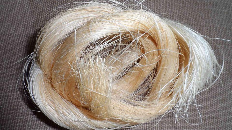Abaca, a fibre from the Philippines used in teabags and banknotes, is as durable as polyester but will decompose within two months.