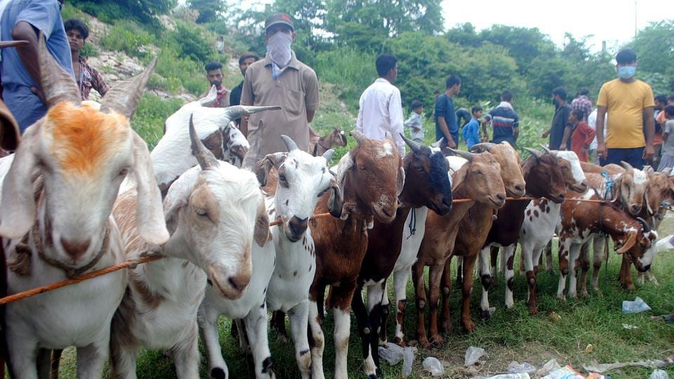 Authorities in many states have put restrictions on the sale and slaughter of animals for Edi-ul-Adha.