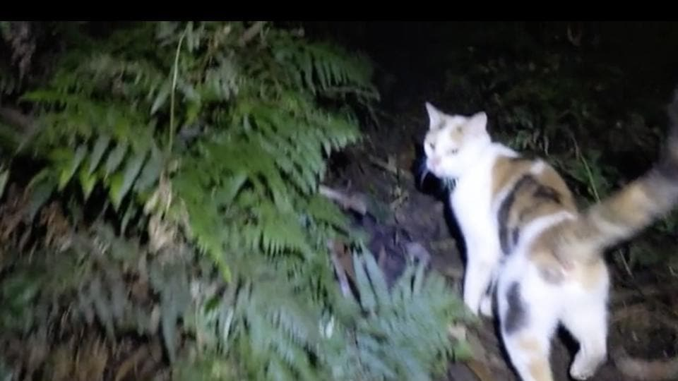 The image shows a cat walking in the wilderness.