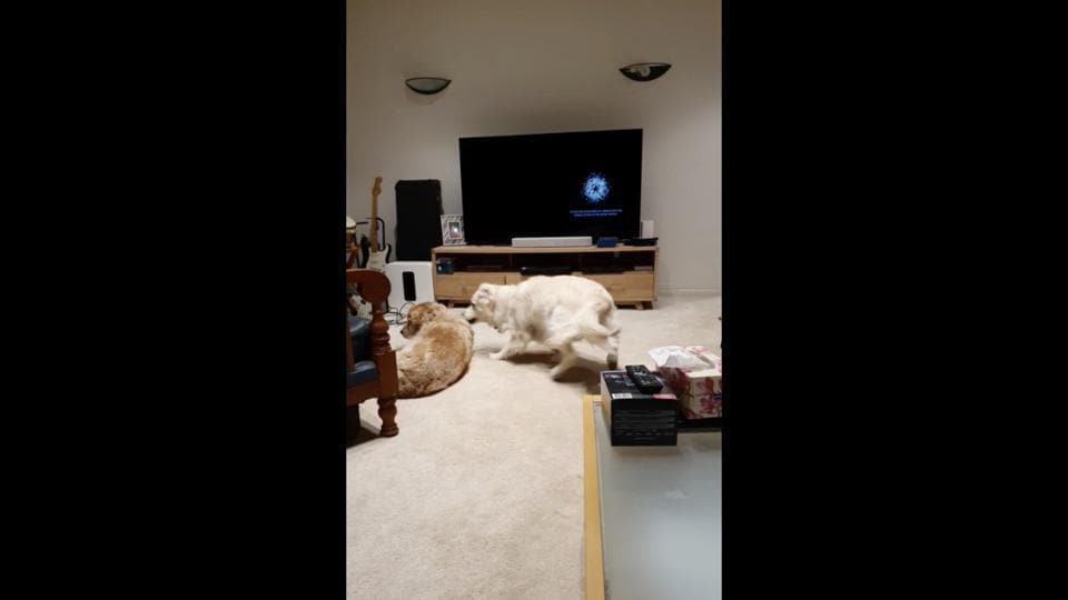 The image shows two doggos hanging out on a carpeted floor, indoors.