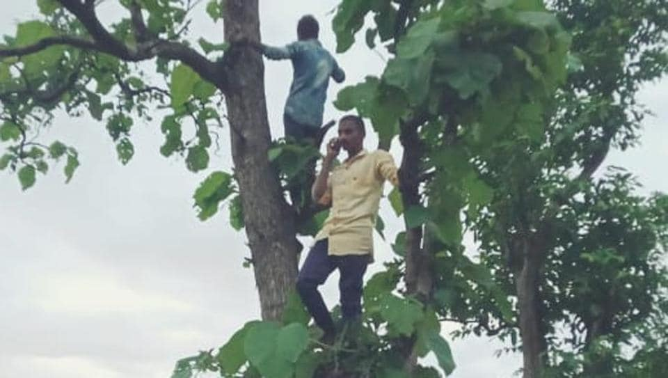 The villagers are forced to climb on top of the trees in search of mobile network to make calls.