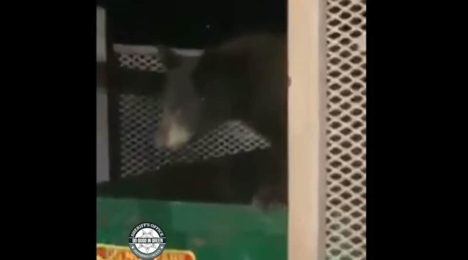 The image shows one of the cubs getting out of the dumpster.