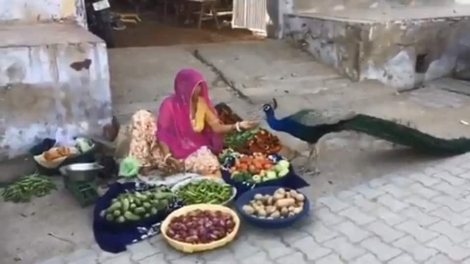 The image shows the woman feeding the peacock.