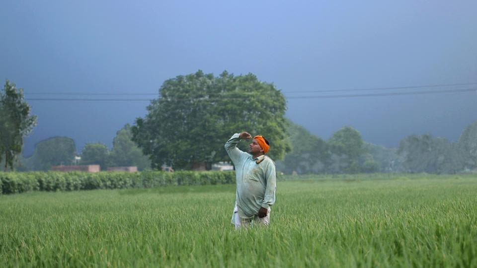 A farmer looks at the sky on an overcast day while standing in a paddy field in Bathinda, Punjab on July 30. According to the Ministry of Agriculture & Farmers' Welfare, a rapid progress of the monsoon this year has helped Indian farmers plant nearly 14% more land than last year, Reuters reported. (Sanjeev Kumar / HT Photo)
