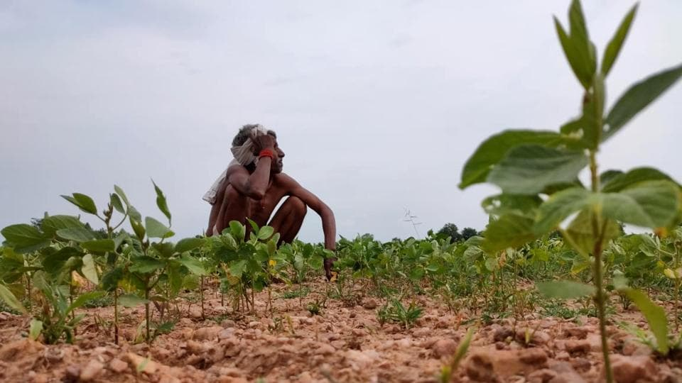 A farmer seen at his newly sown field in Chhatarpur, Madhya Pradesh on July 30. The weather office on July 31 said monsoon rains are expected to be 104% of the average in August and September this year. (ANI)