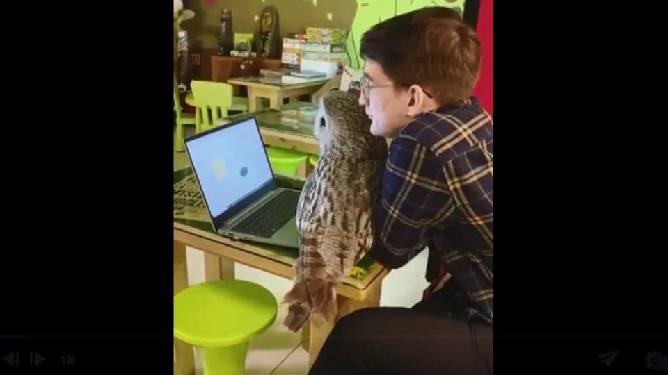The image shows the man and the owl.
