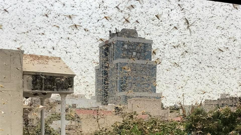 A swarm of locusts spotted at DLF Phase 2, at MG Road, near MGF Metropolitan Mall at 11 am, in Gurugram, India, on Saturday. 27 June 2020. (HT Photo)