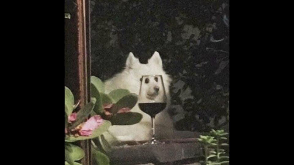 The image shows a doggo.