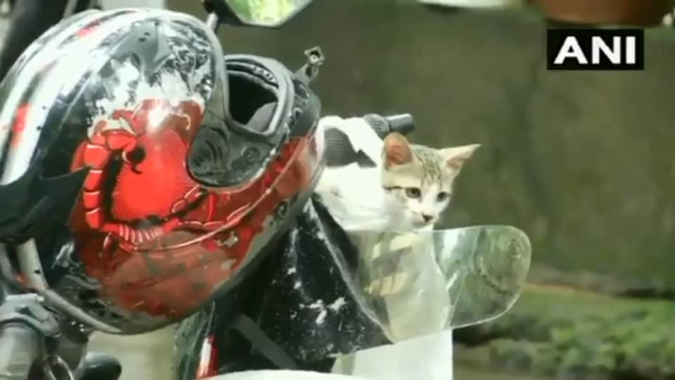 The image shows the kitten on the motorbike.
