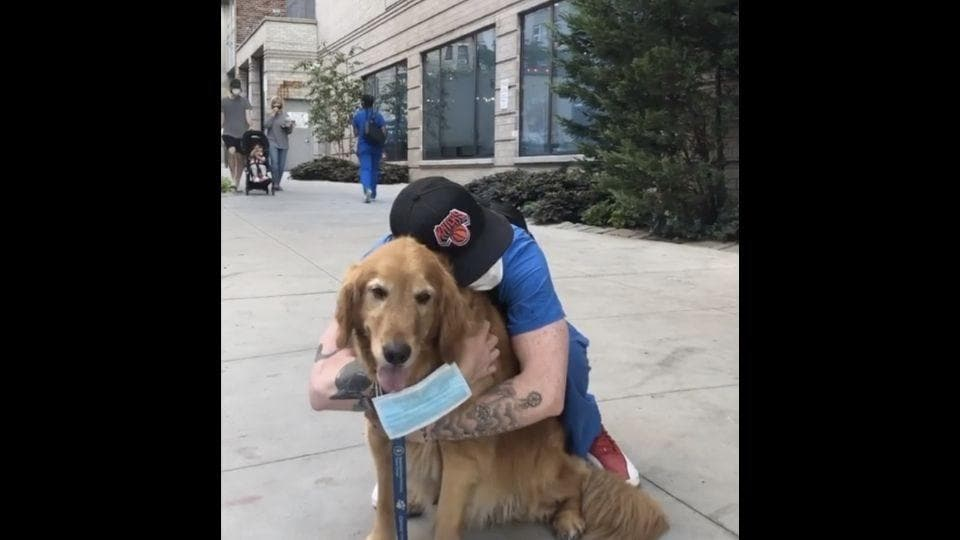 This image shows a therapy dog named Buddy Gill.