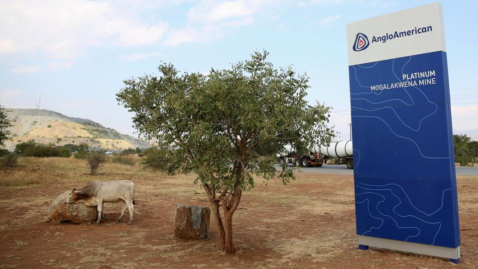 A cow is seen near the AngloAmerican sign board outside the Mogalakwena platinum mine in Mokopane , north-western part of South Africa , Limpopo province