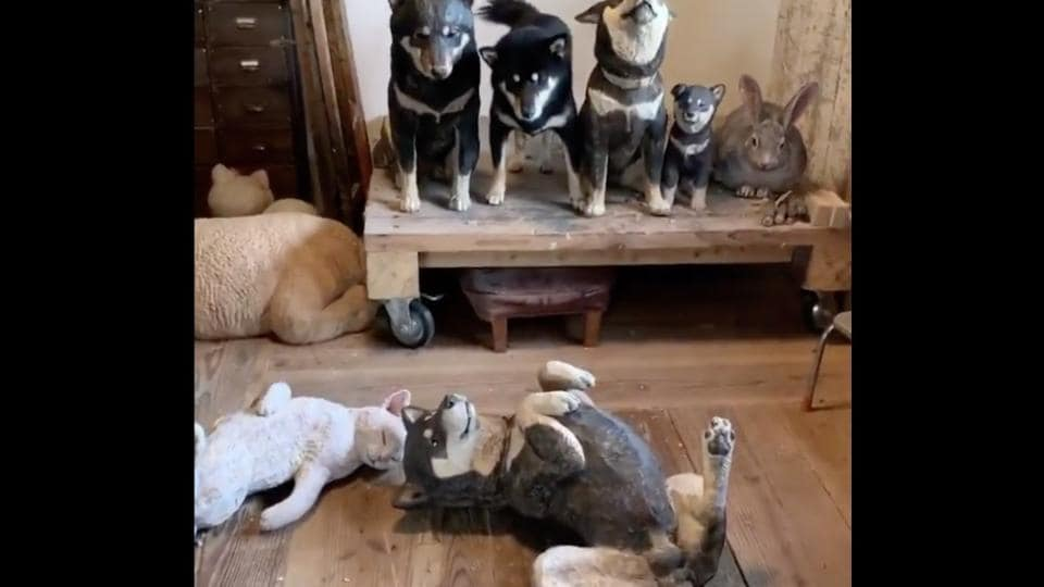 Let's see if you can distinguish the real-life dog from the wooden carvings.