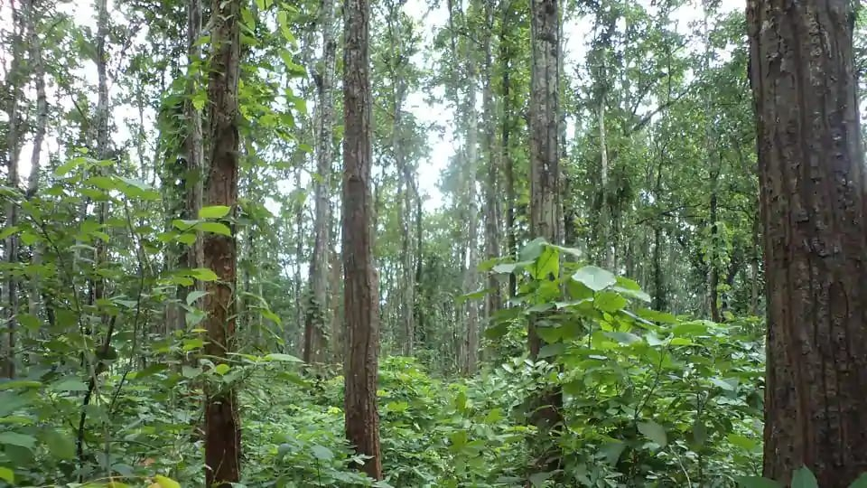 Tribals and other traditional forest-dwellers will be provided urban forestland under the Scheduled Tribes and Other Traditional Forest Dwellers by Chhattisgarh government