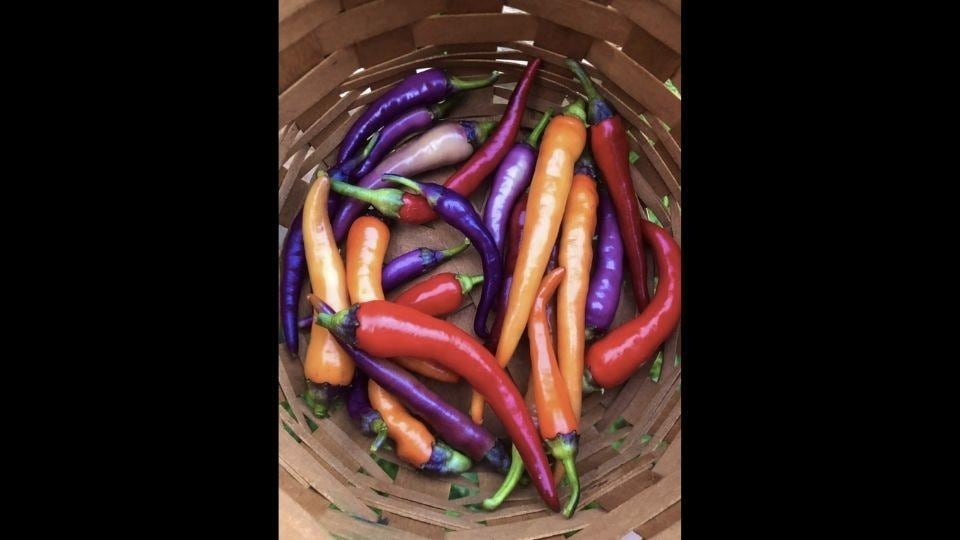 The image shows multicoloured peppers kept in a basket.