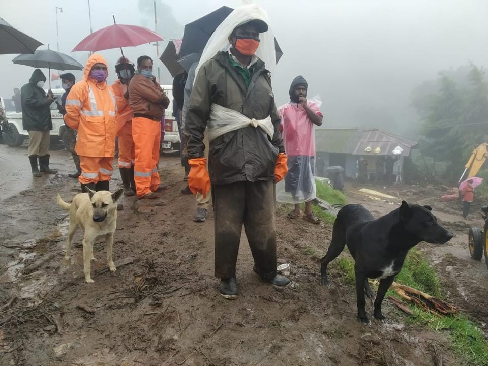 The dogs are seen at the landslide spot in Rajamalai of Kerala's Idukki district where at least 45 people have died and 28 are still missing.