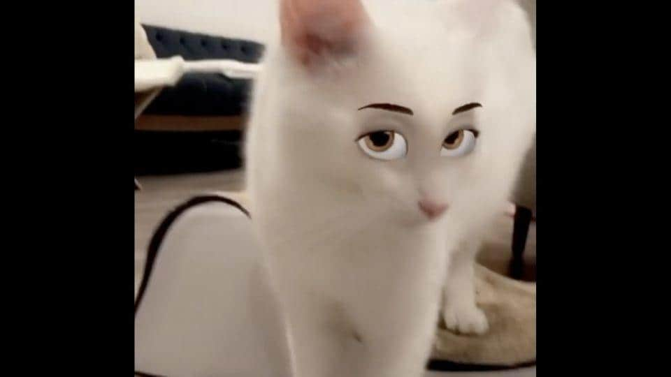 Video shows two cats trying on cartoon eye filters on Instagram. Spoiler alert: It is hilarious