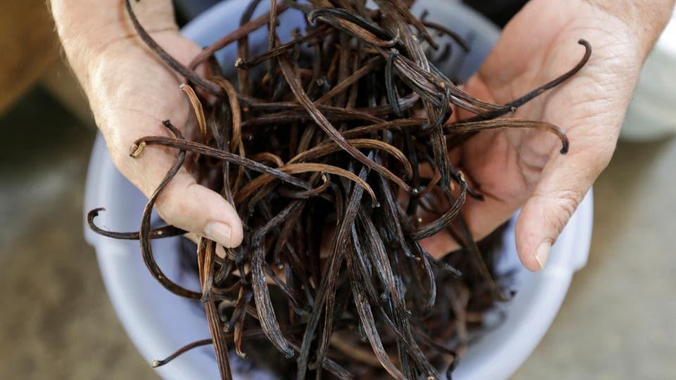 Iton Rifa'i, a 74-year-old vanilla farmer, shows dried vanilla beans at Kebon Kakek farm in Serang, Banten province, Indonesia, July 25, 2020.
