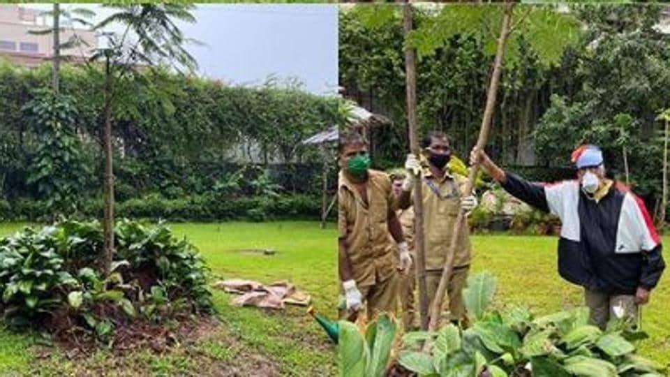 Amitabh Bachchan planted a new Gulmohar sapling at his residence in Mumbai.
