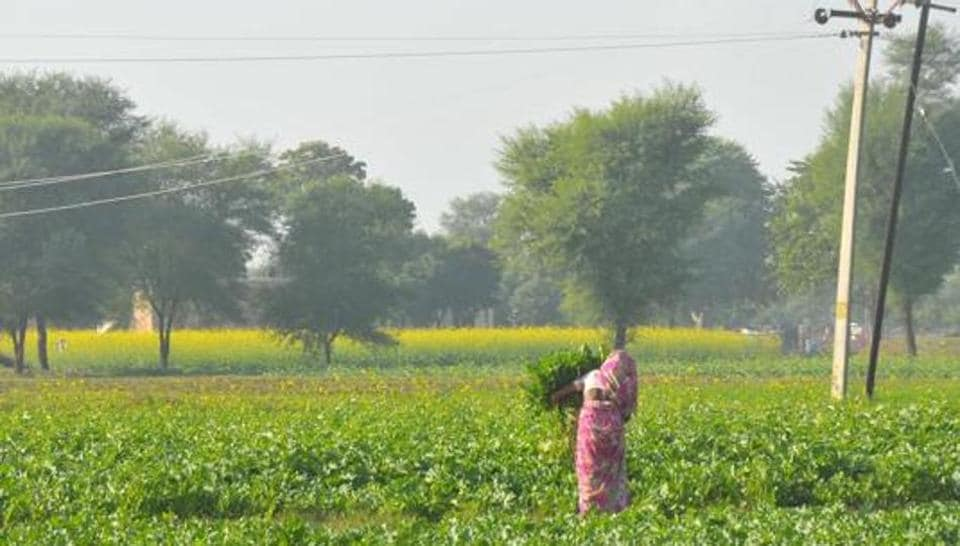 A farmer works near power lines passing through her field.