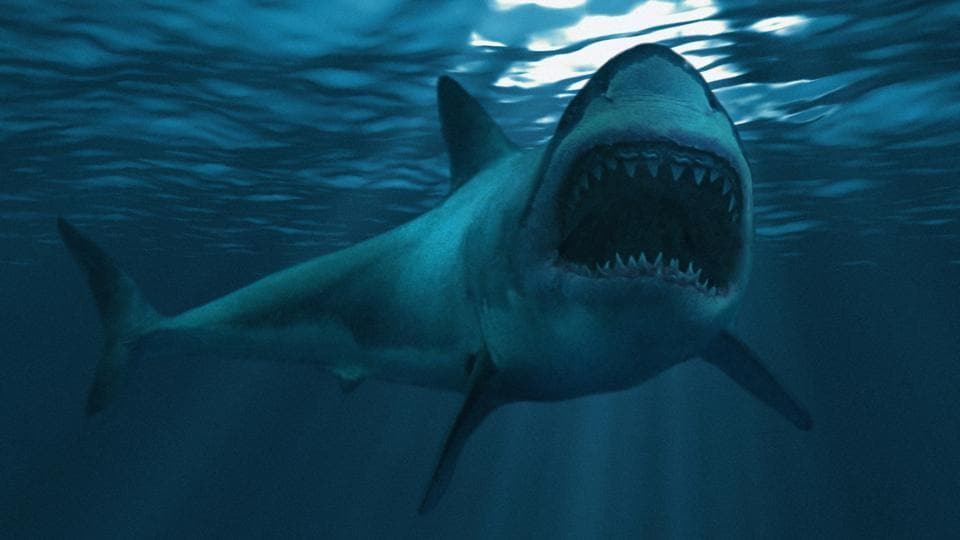 New South Wales state police said the woman and a man were surfing when she was bitten on the right calf and the back of her thigh. Her companion then punched the estimated 3-meter (10-foot) shark until it let her go.