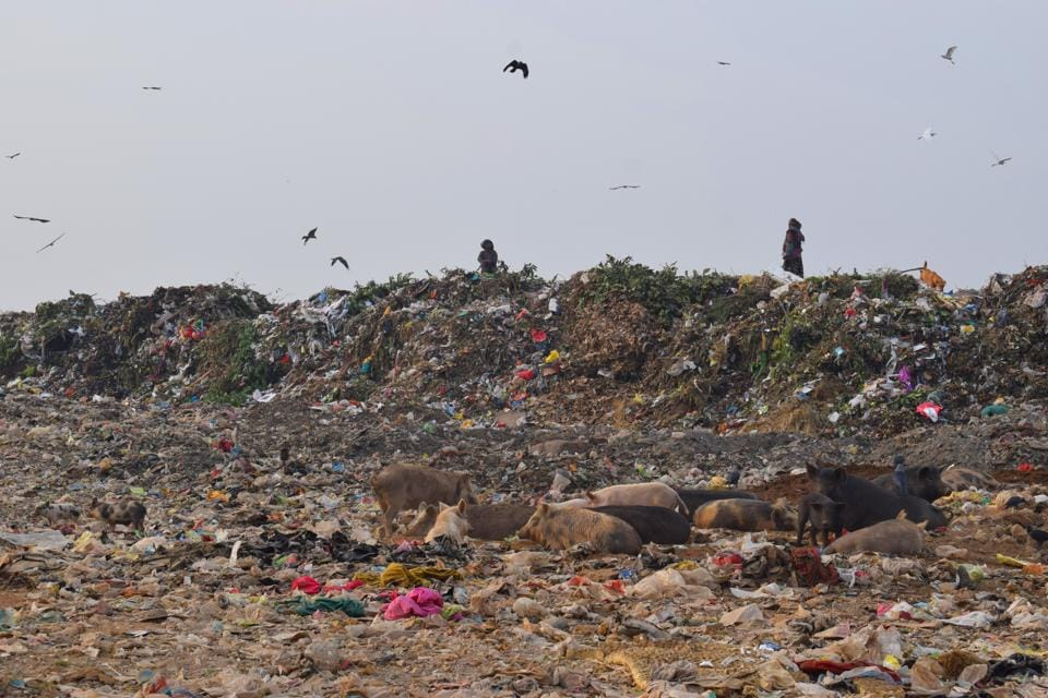 A view of the garbage dump at Sector 38 in Chandigarh.