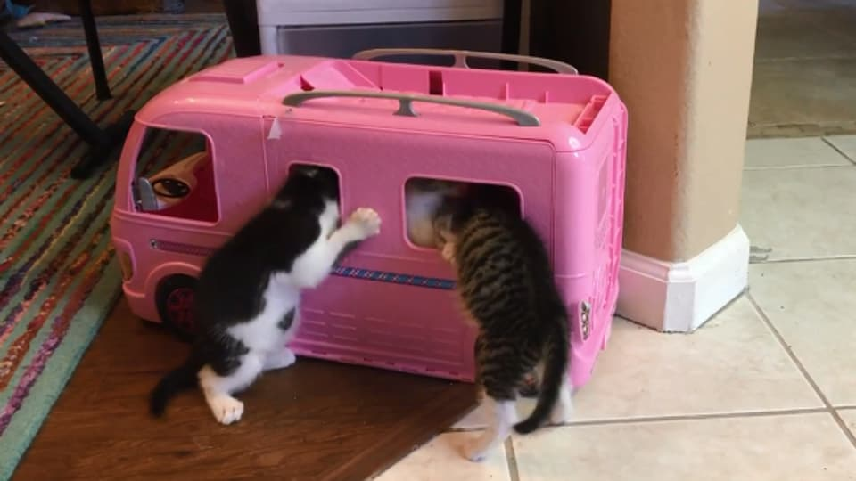 The image shows the kittens playing with the toy van.