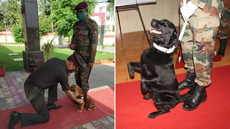 Sophie of Special Frontier Force (Bomb Disposal Squad) (left) and Vida of an army dog unit located in Northern Command (right) have been awarded with the Chief of Army Staff 'Commendation Cards'.