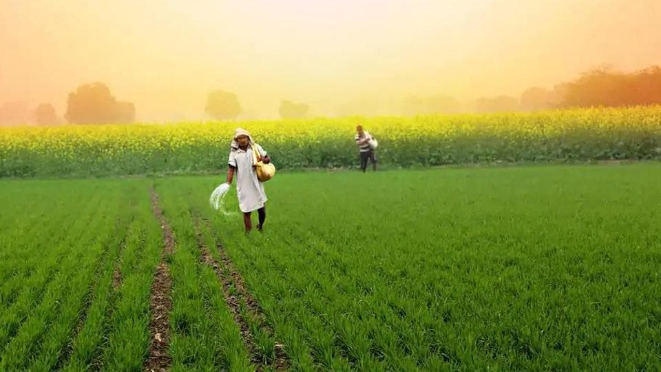 The suspended retailers charged that they get the fertilizer at a high price from wholesalers. So, they give it at a high price to farmers. (Getty images)