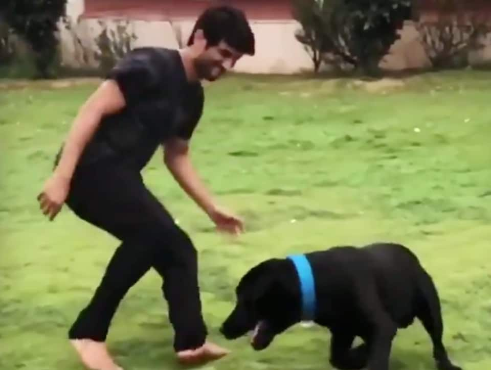 Sushant Singh Rajput's dogs Amar, Akbar, Anthony are up for adoption, actor sent money for their care a day before death – bollywood