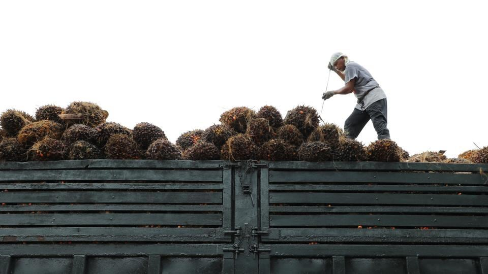 As lockdown policies restrict travel in many parts of the region, and the Malaysian government looks to cut back hiring of migrant workers, palm growers are left with little choice.