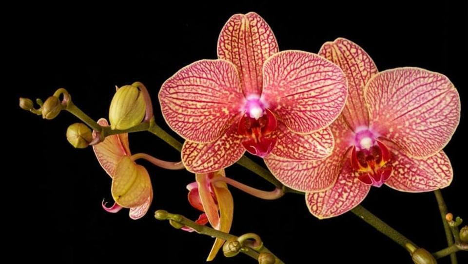 Representational image of an orchid