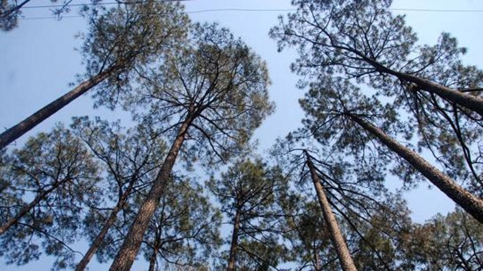 In the last two surveys conducted by the Forest Survey of India over a period of four years from 2015 to 2019, Uttarakhand has not reported an increase of even 1% forest cover.